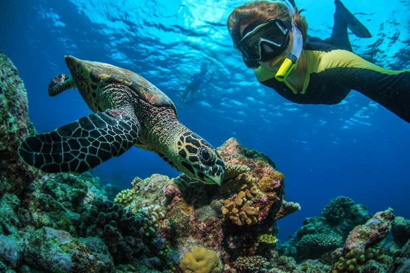 A snorkeler taking a selfie with a green sea turtle