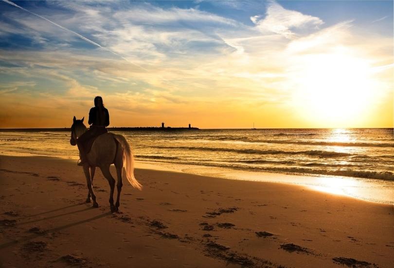 sunset_horse