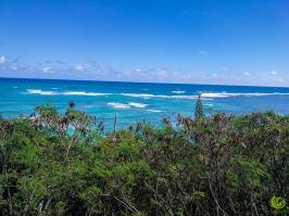 oceanview 1